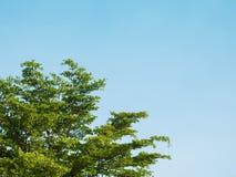 Δέντρο με τον ουρανό Στοκ Εικόνες