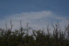 Δέντρο με τον ουρανό blu σύννεφων στοκ φωτογραφία με δικαίωμα ελεύθερης χρήσης