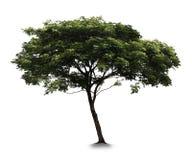 Δέντρο με το άσπρο υπόβαθρο στοκ φωτογραφία με δικαίωμα ελεύθερης χρήσης