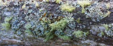 Δέντρο με το βρύο Στοκ Φωτογραφίες