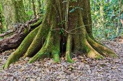 Δέντρο με το βρύο Στοκ Εικόνες