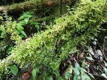 Δέντρο με το βρύο Ecoturismo, οικοτουρισμός στη Κόστα Ρίκα στοκ εικόνα