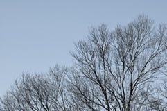 Δέντρο με το γκρίζο υπόβαθρο ουρανού Στοκ Φωτογραφίες