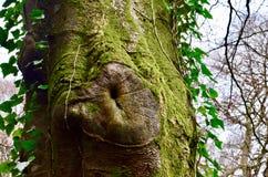 Δέντρο με το ειδικό σιτάρι Στοκ φωτογραφίες με δικαίωμα ελεύθερης χρήσης
