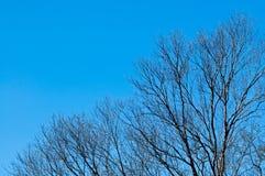 Δέντρο με το υπόβαθρο μπλε ουρανού Στοκ φωτογραφία με δικαίωμα ελεύθερης χρήσης