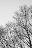 Δέντρο με το υπόβαθρο μπλε ουρανού Στοκ φωτογραφίες με δικαίωμα ελεύθερης χρήσης