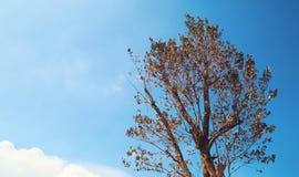 Δέντρο με το φωτεινό ουρανό το φθινόπωρο Στοκ Εικόνες