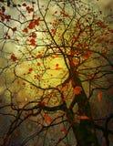Δέντρο με το φύλλο φθινοπώρου στον ήλιο ακτίνων Στοκ εικόνες με δικαίωμα ελεύθερης χρήσης