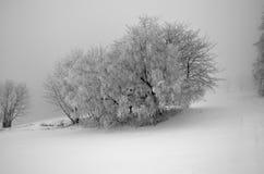 Δέντρο με το χιόνι Στοκ φωτογραφίες με δικαίωμα ελεύθερης χρήσης
