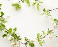 Δέντρο μηλιάς ανθών στο ΑΣΠΡΟ υπόβαθρο Στοκ Φωτογραφία