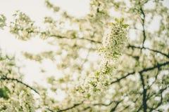 Δέντρο μηλιάς ανθών στην άνοιξη Στοκ φωτογραφία με δικαίωμα ελεύθερης χρήσης