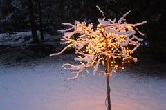 Δέντρο μηλιάς καβουριών Χριστουγέννων στοκ φωτογραφία