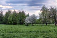 Δέντρο μηλιάς λουλουδιών στο ηλιοβασίλεμα τομέων Στοκ φωτογραφία με δικαίωμα ελεύθερης χρήσης