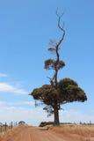 δέντρο μοναδικό στοκ φωτογραφία