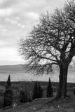 Δέντρο μοναστηριών Shavnabada Στοκ Εικόνα