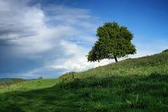 Δέντρο μοναχικών το καλοκαίρι Στοκ εικόνες με δικαίωμα ελεύθερης χρήσης