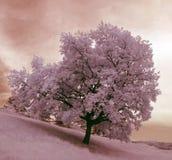 δέντρο μοναχικών στοκ φωτογραφίες με δικαίωμα ελεύθερης χρήσης