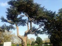 Δέντρο μπαμπάδων Στοκ Εικόνες