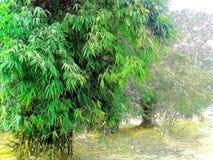 Δέντρο μπαμπού στοκ φωτογραφία με δικαίωμα ελεύθερης χρήσης