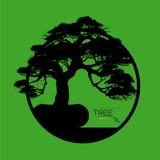 Δέντρο μπονσάι, διανυσματική απεικόνιση Στοκ φωτογραφίες με δικαίωμα ελεύθερης χρήσης