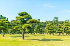 Δέντρο μπονσάι στον κήπο του αυτοκρατορικού παλατιού στην πόλη του Τόκιο Στοκ Εικόνες