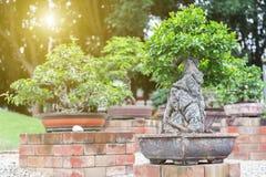 Δέντρο μπονσάι στο κεραμικό δοχείο στον κήπο μπονσάι Στοκ φωτογραφίες με δικαίωμα ελεύθερης χρήσης