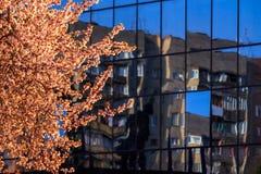 Δέντρο μπροστά από τα παράθυρα με ένα επίστρωμα καθρεφτών Στοκ Εικόνες