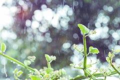 Δέντρο μωρών τη βροχερή ημέρα με το θολωμένο υπόβαθρο Στοκ Εικόνες