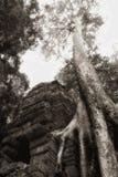 δέντρο ναών angkor στοκ φωτογραφίες