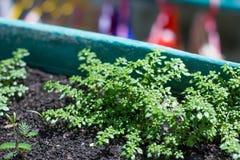 Δέντρο νεαρών βλαστών Στοκ εικόνα με δικαίωμα ελεύθερης χρήσης