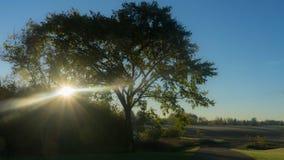 Δέντρο -νόμου ` s Στοκ Φωτογραφία