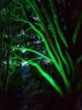 Δέντρο νύχτας με τα πράσινα φώτα Στοκ Εικόνες