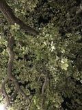 Δέντρο νύχτας στοκ εικόνες