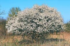 Δέντρο ξυπνήστε μια σαφή ημέρα στοκ φωτογραφία με δικαίωμα ελεύθερης χρήσης