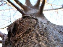 Δέντρο ξύλων καρυδιάς στοκ εικόνα
