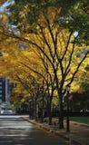 δέντρο οδών του Μανχάτταν γ&r Στοκ φωτογραφία με δικαίωμα ελεύθερης χρήσης