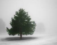 δέντρο ομίχλης Στοκ φωτογραφία με δικαίωμα ελεύθερης χρήσης