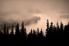 Δέντρο ομίχλης και πεύκων τραχύ Mountainside Στοκ Εικόνες