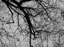 Δέντρο οξιών το χειμώνα με τη διάβαση των κοράκων Στοκ Φωτογραφία