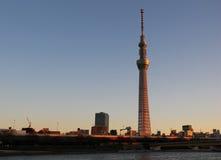 Δέντρο ουρανού του Τόκιο Στοκ Φωτογραφίες