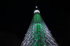 Δέντρο ουρανού του Τόκιο Στοκ Εικόνες