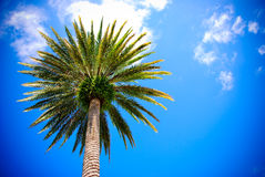 δέντρο ουρανού φοινικών στοκ φωτογραφία με δικαίωμα ελεύθερης χρήσης
