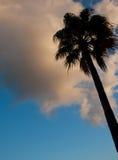 δέντρο ουρανού φοινικών agaiist στοκ εικόνες