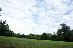 δέντρο ουρανού χλόης στοκ εικόνα με δικαίωμα ελεύθερης χρήσης