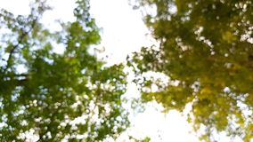 Δέντρο ουρανού στοκ φωτογραφία