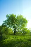 δέντρο ουρανού στοκ φωτογραφία με δικαίωμα ελεύθερης χρήσης