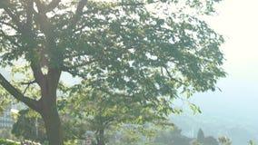 Δέντρο, ουρανός και πάγκος απόθεμα βίντεο