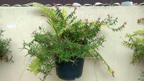 Δέντρο λουλουδιών φτερών flowerpot Στοκ εικόνα με δικαίωμα ελεύθερης χρήσης