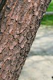 δέντρο πάρκων Στοκ Εικόνα