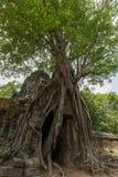 Δέντρο πέρα από το ναό σε Angkor Wat, Καμπότζη Στοκ φωτογραφίες με δικαίωμα ελεύθερης χρήσης